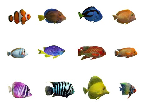 Mesh Animated Fishes