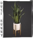 dust bunny . snake plant