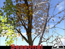 Poplar aspen SEASONAL - 2 LI - M/T