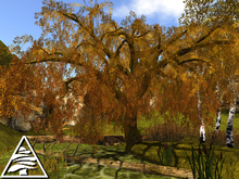 Weeping Willow AUTUMN M/T