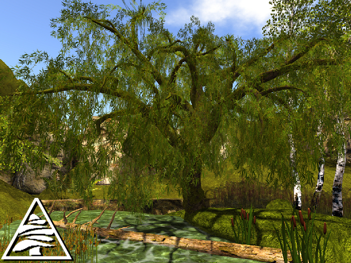 weeping willow MODIFY TRANSFER