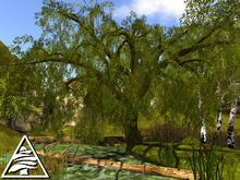 weeping willow MODIFY COPY