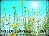Heart - Wild Flowers - Tall Buttercups