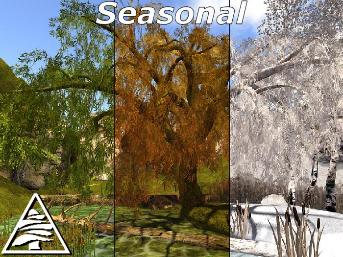 weeping willow SEASONAL C/M