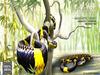 Tlc mangrove snake