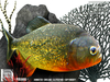 Tlc piranha