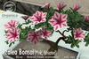 [ Organica ] Azalea Bonsai 1 (Pink, Striated)
