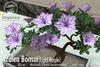 [ Organica ] Azalea Bonsai 1 (Light Purple)
