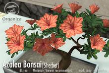 [ Organica ] Azalea Bonsai 1 (Sherbet)