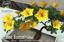 [ Organica ] Azalea Bonsai 1 (Yellow)