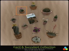 CR C&S Gacha Box 3 Gymnocalycium horstii