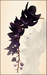 Orchkakis black violet