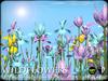 Heart - Wild Flowers - Iris