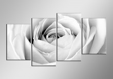 PICTURE WHITE ROSE