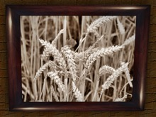 Kitchen picture cornfield with frame *Box*