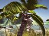 Cj cascading pond   tropical 03