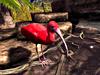 Cj cascading pond   tropical 07