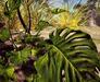 Cj cascading pond   tropical 09