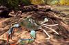 Cj cascading pond   tropical 10