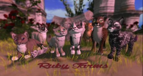 [HoR] Stray Cats Gacha