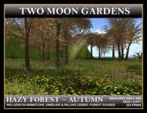 TMG - HAZY FOREST - AUTUMN*