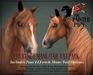 The Painted Pony ~ Chestnut Colors Mane/Tail Textures Fat Pack for *WH* BENTO Riding horse