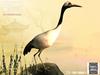 Tlc crane