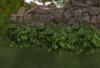 Wild bush hedge pic copy