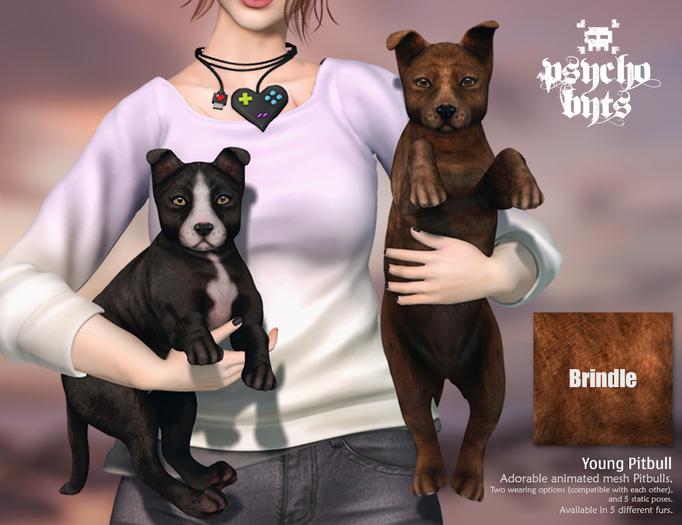 .{PSYCHO:Byts}.Young Pitbull - Brindle