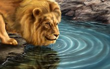 Great poster texture lion drinking water