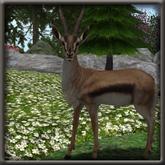 The Happy Hat - Animated Gazelle