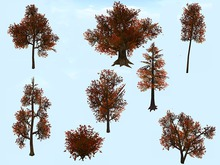 Trees Pack - Fall