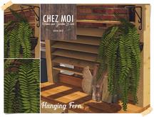 Hanging Fern ♥ CHEZ MOI