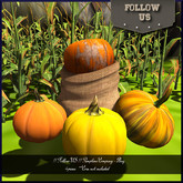 !! Follow US !! Happy Halloween Pumpkins Company - Bag gift