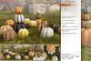 Sway's [Autumn] Pumpkin decoration