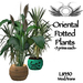 Oriental potted plants