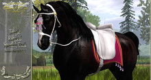 Cheval D'or - Teegle - Spanish Tack.