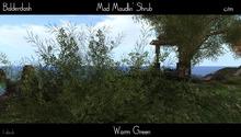 Balderdash - Mad Maudlin' shrub - Warm Green