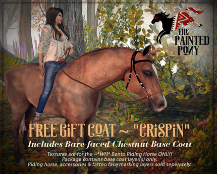 The Painted Pony ~ *GIFT COAT* for *WH* Riding horse