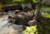 Cj cascading pond   the koi 02