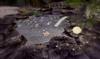 Cj cascading pond   the koi 11