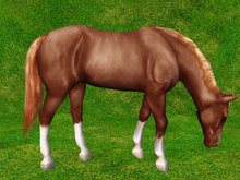 Bay Grazing Horse - Mesh