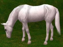 White Grazing Horse - Mesh