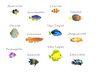 Fishes glossary