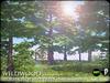 Heart   wildwood   horse chestnut   a2