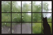 Rainy Cat Day Window Animated Picture