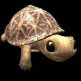 HEXtraordinary - Baby Star Tortoise Companion
