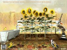 Birds, Sunflower, field