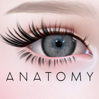 ANATOMY -  Circle Lens - Grey