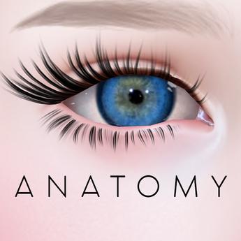 ANATOMY -  Circle Lens - Dark Blue